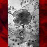 «ΧΡΩΜΟΓΡΑΦΙΑ ΙΙΙ»  | Έκθεση Φωτογραφία της Αγγελικής Δεκουλάκου