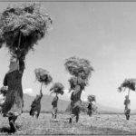 Τάκης Τλούπας – Ο ποιητής του Θεσσαλικού κάμπου