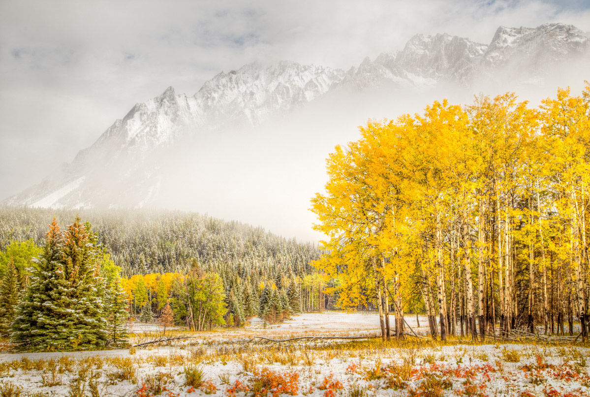 Snowy Mountain and Aspen, Alberta