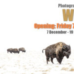 """Θεματική έκθεση φωτογραφίας """"Winter"""" στη Blank Wall Gallery"""