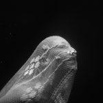 «Με μια γεύση τρικυμίας στα χείλη» / Παρουσίαση του φωτογραφικού έργου της Renée Revah