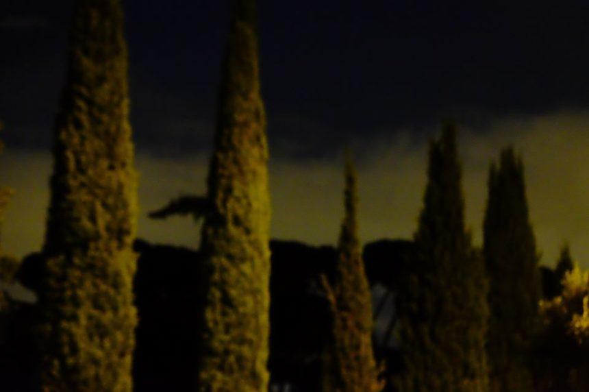 """Ο """"Κρυφός κήπος"""" –  Έκθεση φωτογραφίας της Ένης Κούκουλα"""