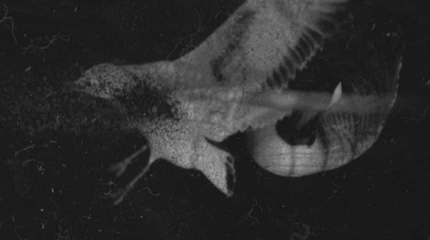 Dimitra Dede - Mayflies