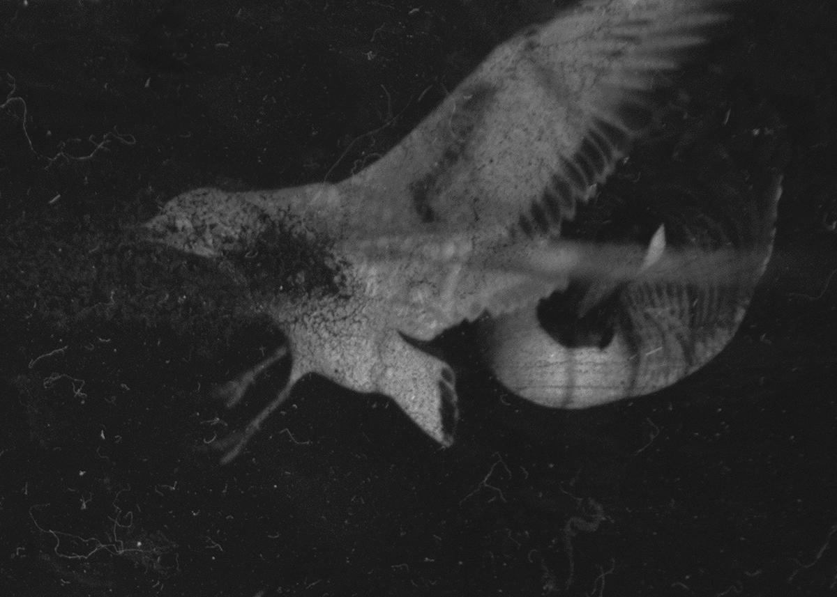 Dimitra Dede – Mayflies