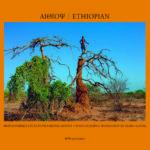 Αιθίοψ – φωτογραφικό λεύκωμα από το workshop της Μαρως Κουρή