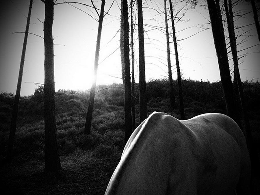 Alexandros Vrettakos - Quiet forest
