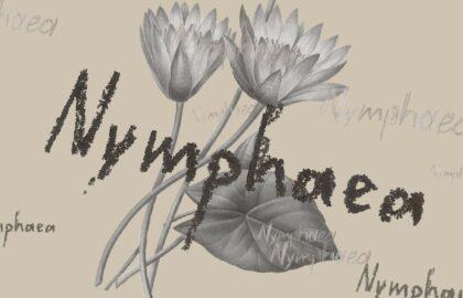 Nymphaea: Ένας οπτικός διάλογος ανάμεσα στον Αλέξανδρο Γαρνάβο και τη Δανάη Παναγιωτίδη