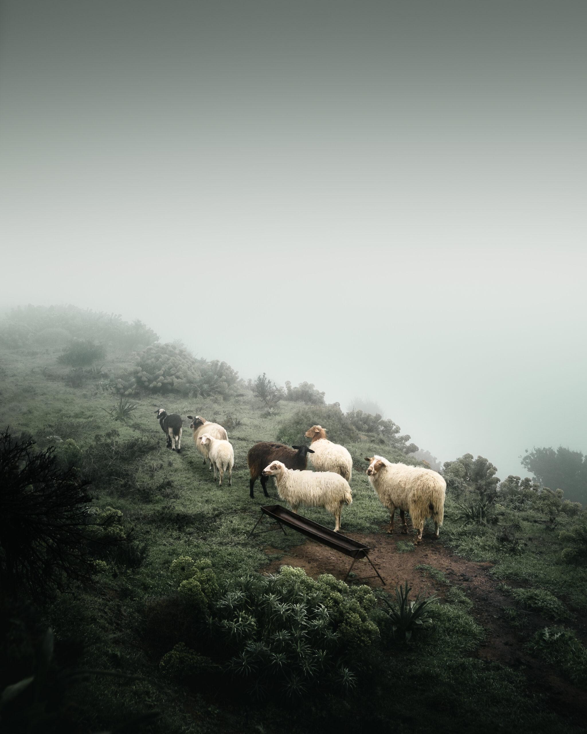 © Theodoros Apeiranthitis, Greece, Winner, National Awards, 2021 Sony World Photography Awards
