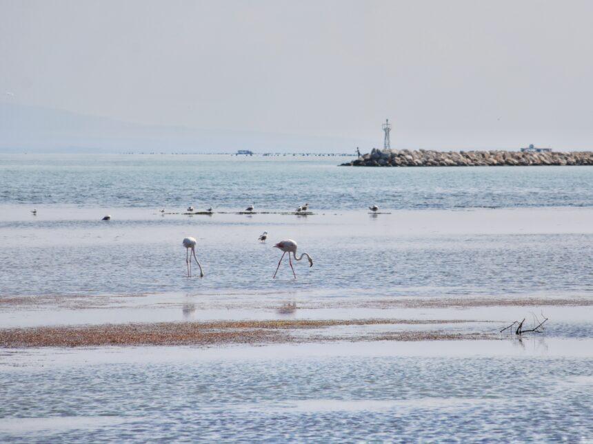 """""""Να σ΄αγναντεύω θάλασσα"""" – έκθεση φωτογραφίας των Freddy Schmitt και Μένης Σεϊρίδου"""