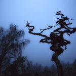 Ζεν - Αφαίρεση - Περιπλάνηση | Σεμινάρια φωτογραφίας του Δικτύου HOCUS PHOTUS